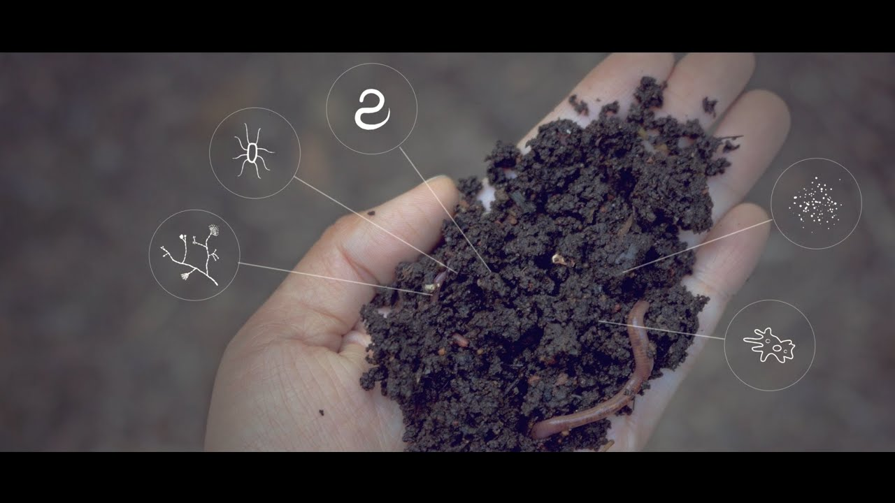 How does potassium humate adjust the soil ph?
