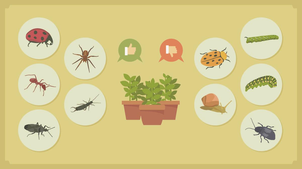 Fulvic acid benefits for plants - Disease resistant function