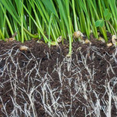 Fulvic Acid Benefits For Plants - Stimulation of crop growth