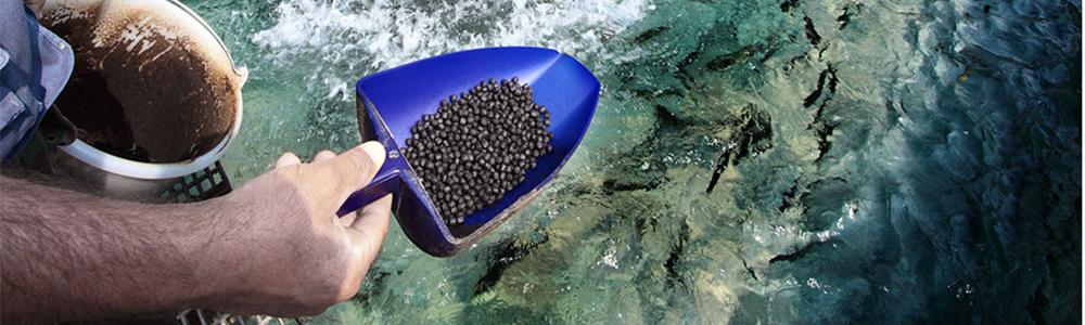 Application of sodium humate in aquaculture.