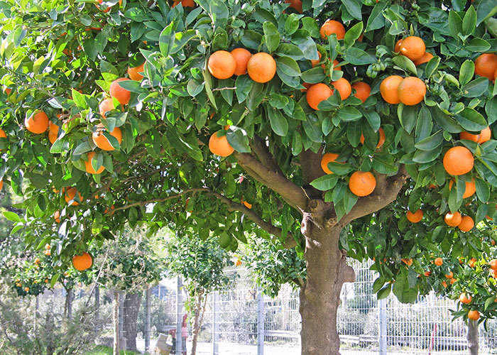 Bio fulvic acid can improve plant quality.