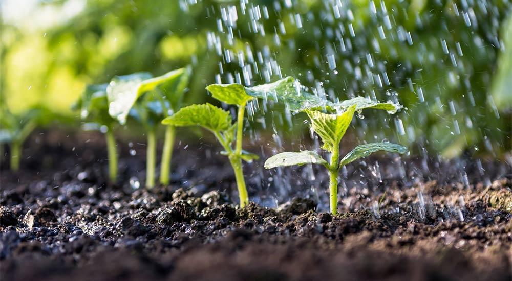 How to use humic acid fertilizer