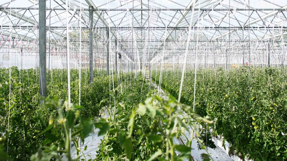 how to choose water soluble fertilizer in greenhouse