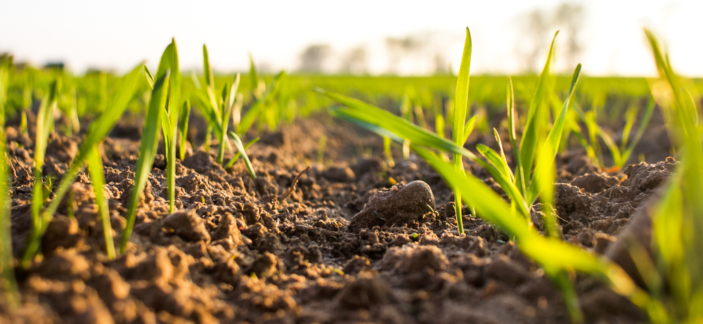 Benefits of humic acid for plants.