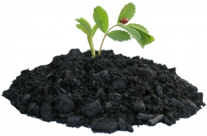 Raw materials for Leonardite humic acid – Leonardite