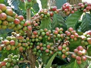 Six effects of humic acid on crops.