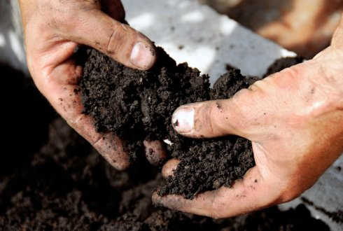 Effects of Humic Acid Organic Fertilizer on Soil.