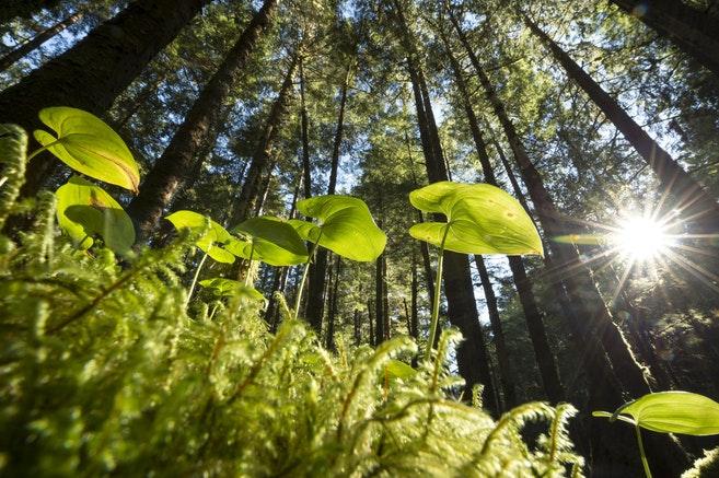 Bio potassium fulvate is a green plant stimulant, it can stimulate plant growth.