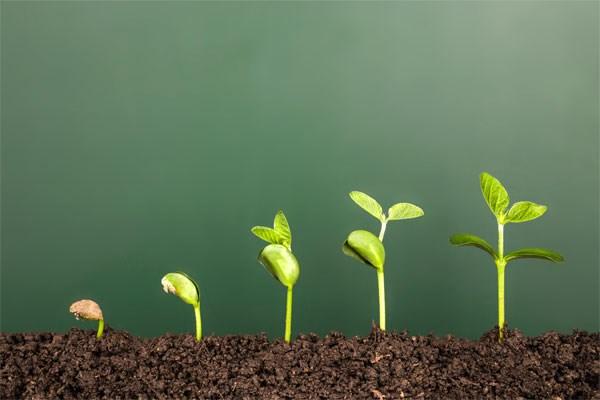 Advantages of potassium humate organic fertilizer.