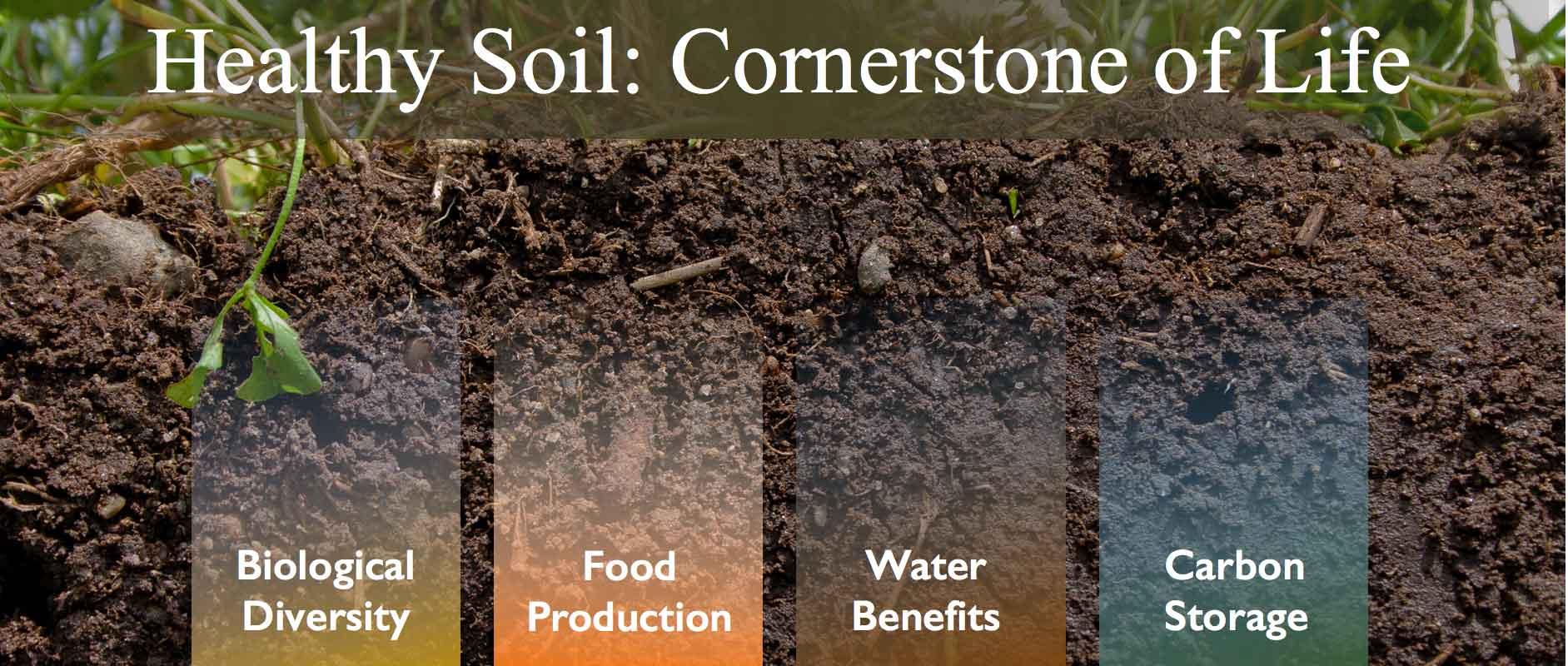 The best humic acid fertilizer suppliers - the best organic fertilizer
