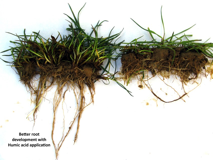 Humic acid for root growth.