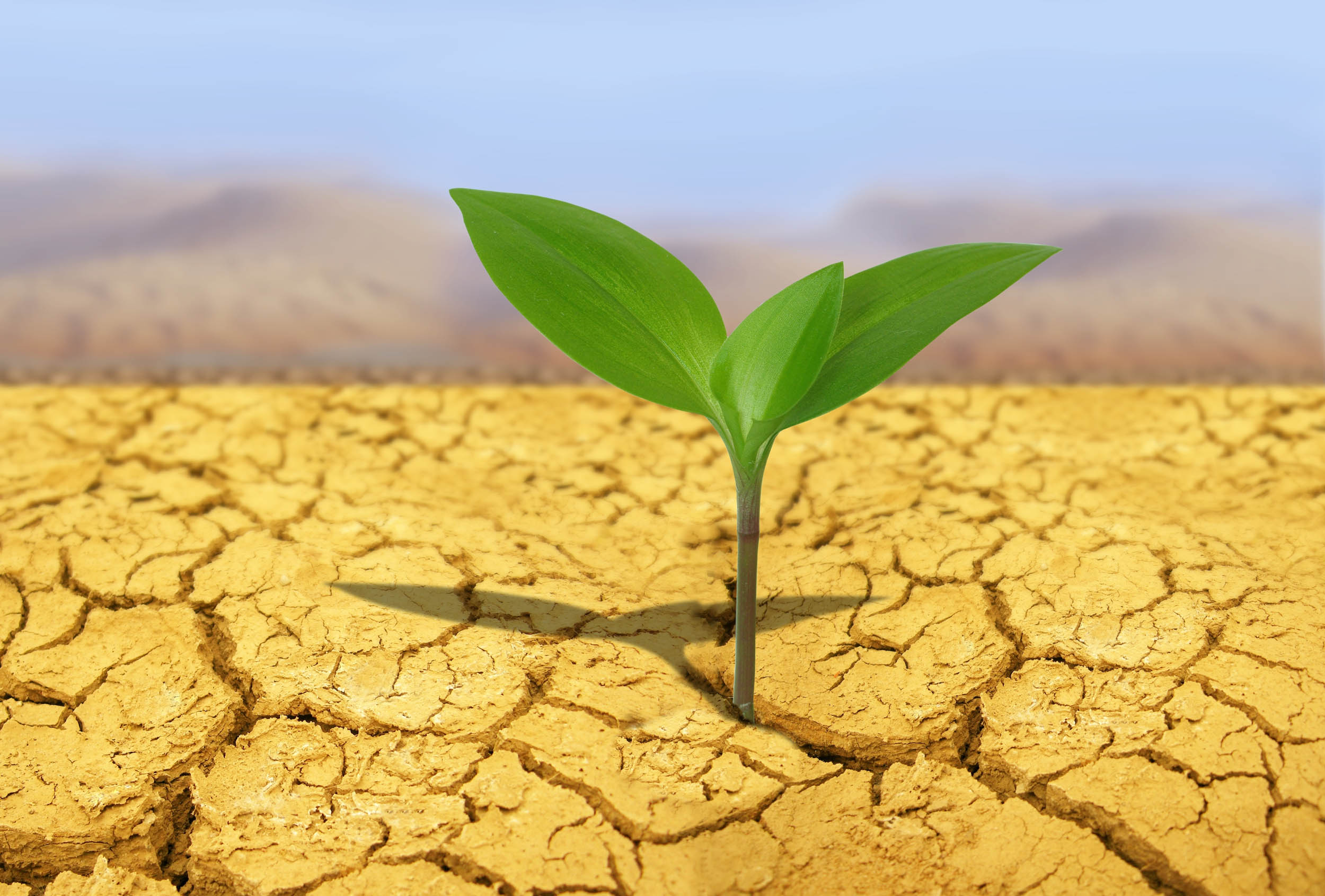 How does leonardite potassium humate improve the plants stress resistance?