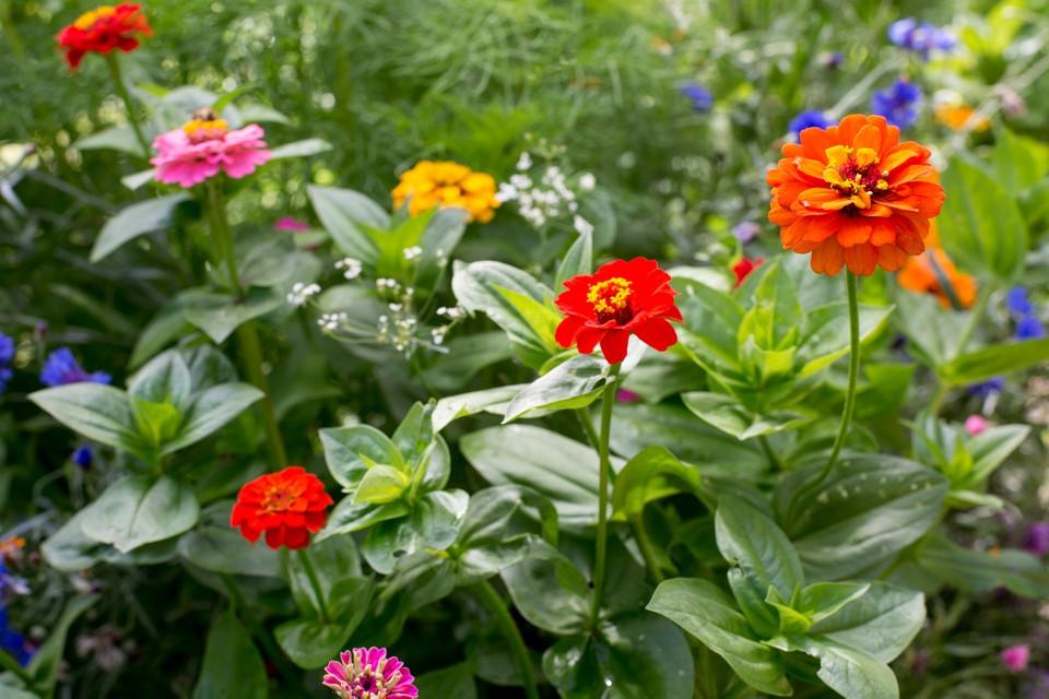 humate organic fertilizer
