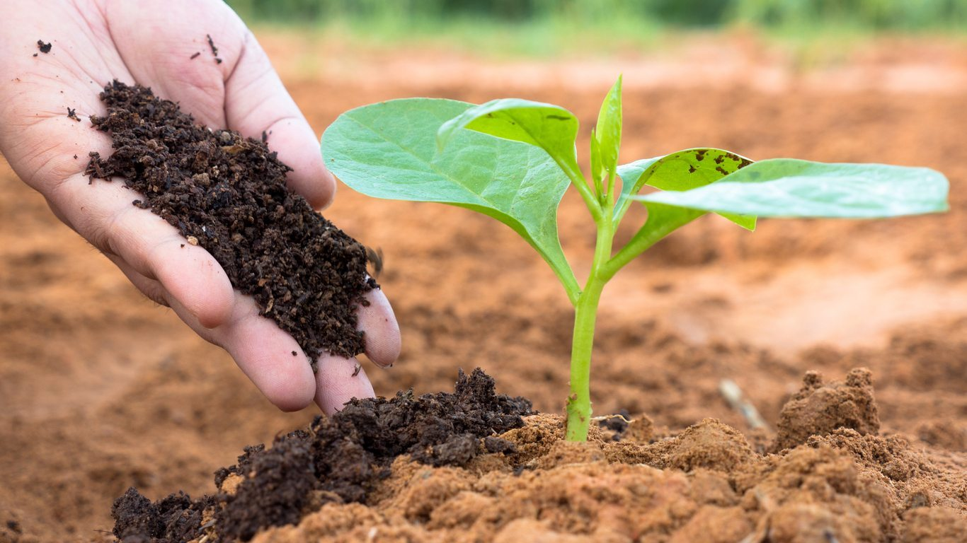 How to apply organic humic acid to make it fully effective?