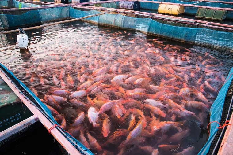 The role of sodium humate in aquaculture: Supply body nutrition and promote body growth