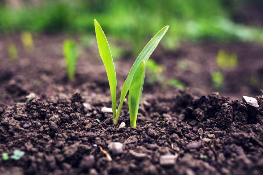 The importance of humic acid for plant growth