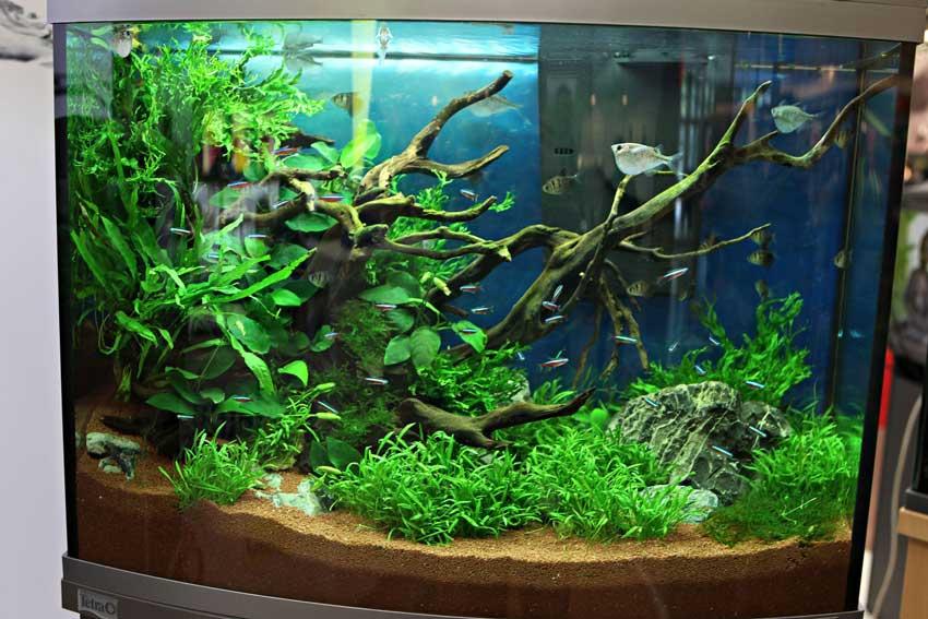 Improved Application of Sodium Humate on ornamental fish and aquatic plants in aquarium